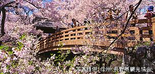 高遠の桜まつり